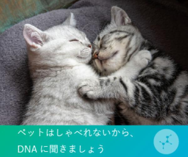 ねこちゃんは喋れないからDNAに聴きましょう!WEBで結果確認可能な猫遺伝子検査 【Pontely】のバナーデザイン