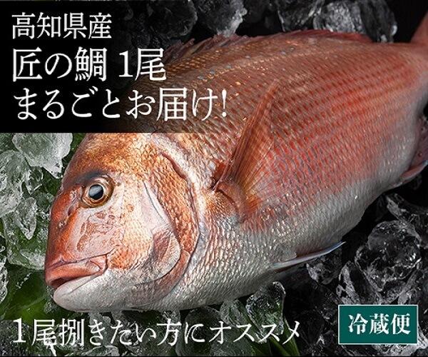 土佐の匠魚を全国へ 匠の魚商オンラインショップ 鯛のバナーデザイン