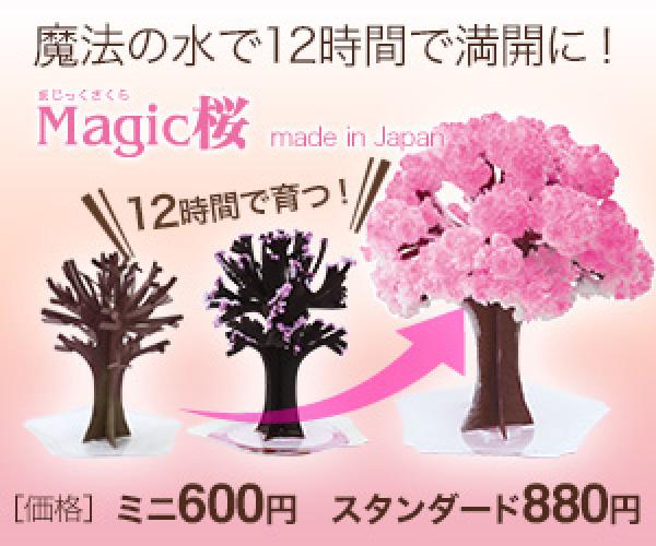 12時間で咲く不思議な桜シリーズ【Magic桜】のバナーデザイン