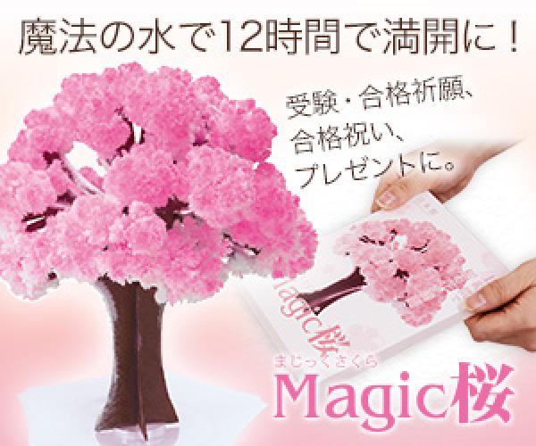 12時間で咲く不思議な桜シリーズ【Magic桜】合格祈願のバナーデザイン
